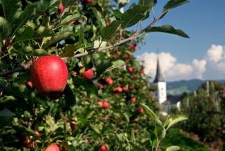 Domizil am Bodensee - Überlingen: Obstregion Bodensee